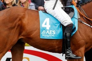 Racehorse at Punchestown sponsored by AES Bord na Mona